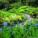 Photo of Redford Gardens