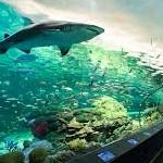 Photo of Ripleys Aquarium