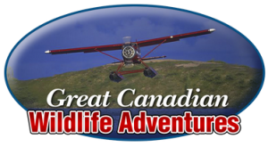 Great Canadian Wildlife Adventures Logo