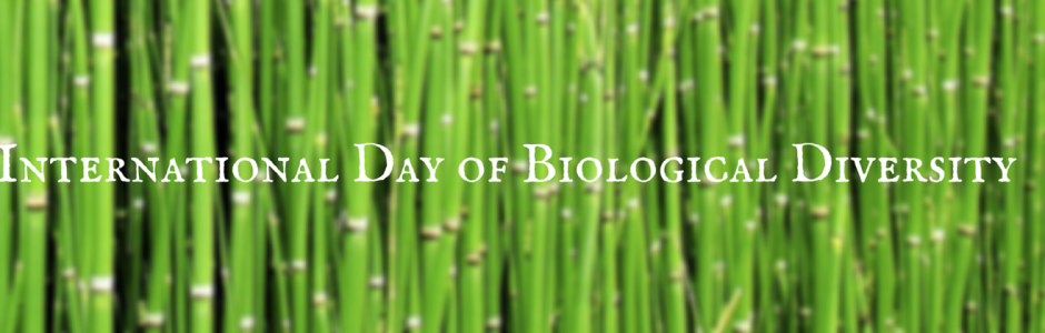 International Day of Biological Diversity