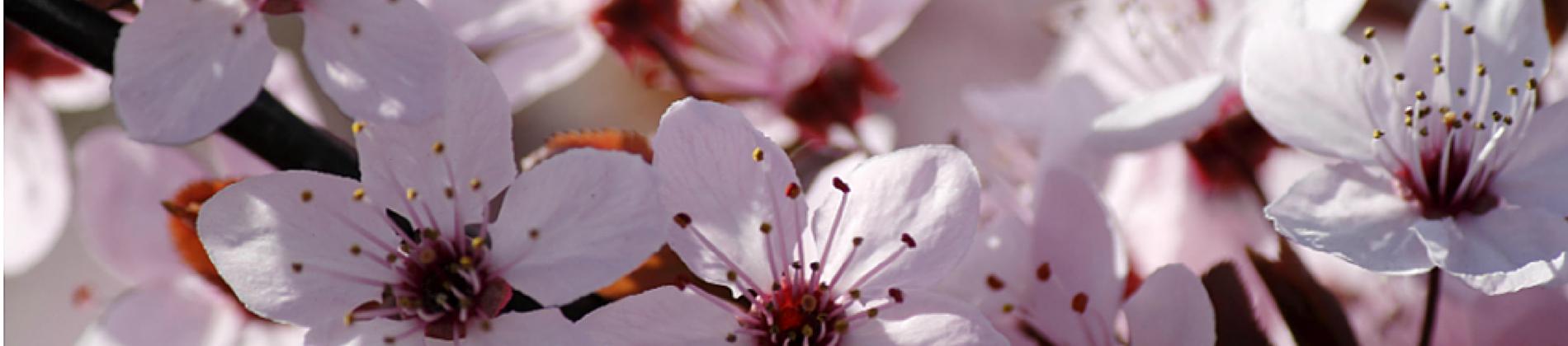 flowers header