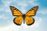 monarch-150-100