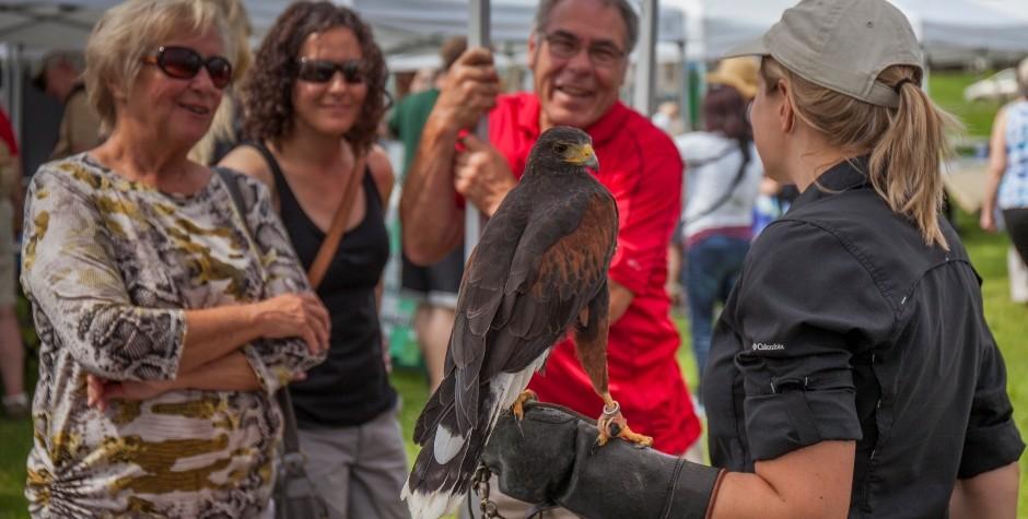 Falcon Ed at the Bird Day Fair 2015
