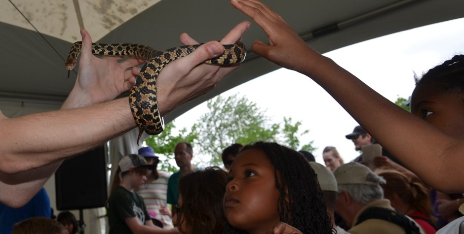 Little Rays Reptiles at the Bird Day Fair 2015