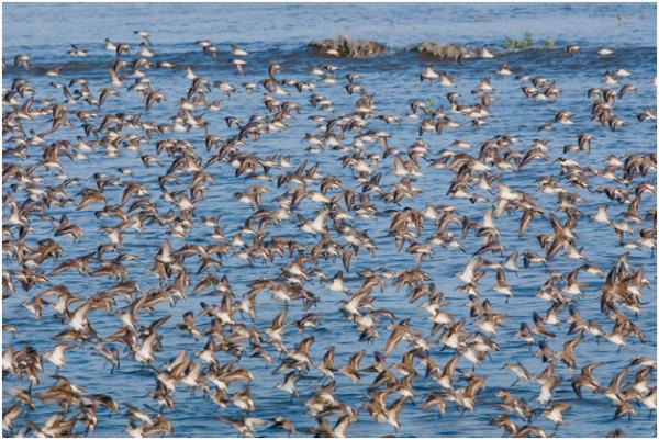 Alaksen National Wildlife Area
