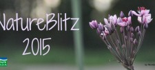 Join our NatureBlitz! Nature Canada celebrates Moth Week in the capital!