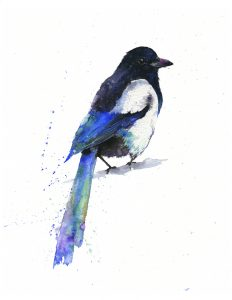 Image of a Magpie