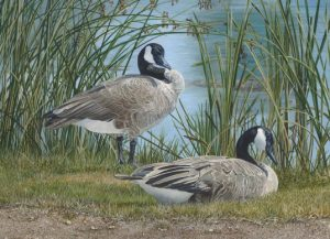 Image of Canada Geese by Anegla Lorenzen