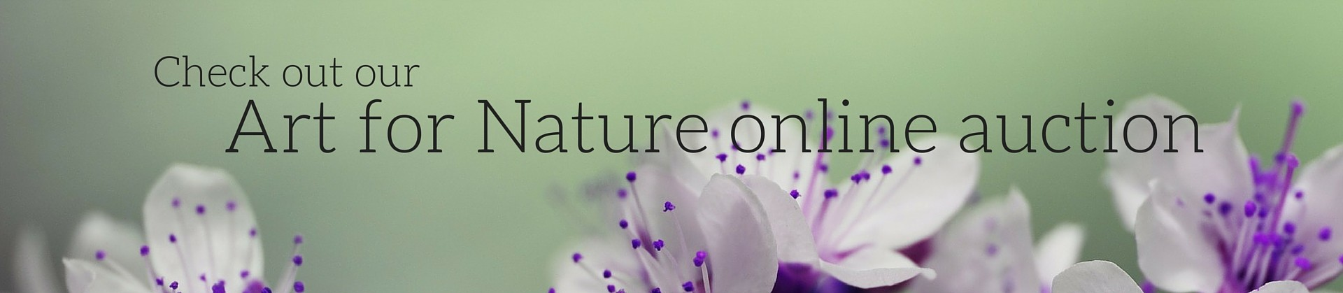 Art-for-Nature-web-slider-1920x419