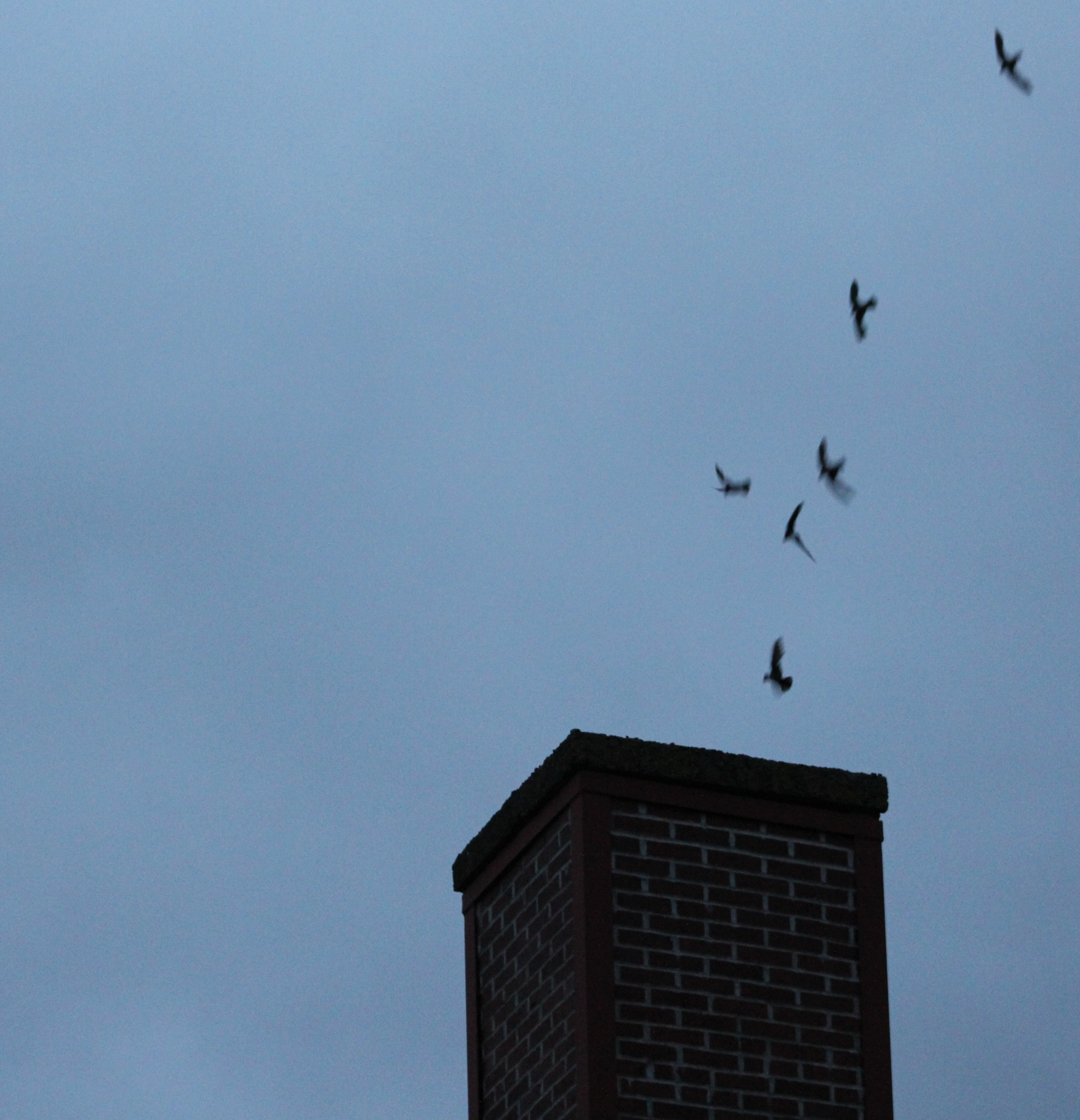 how to get birds out of chimney most popular chimney and wall