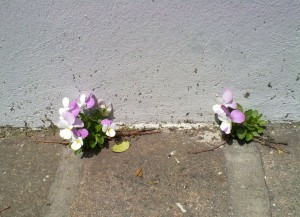 flowers-320173_1280