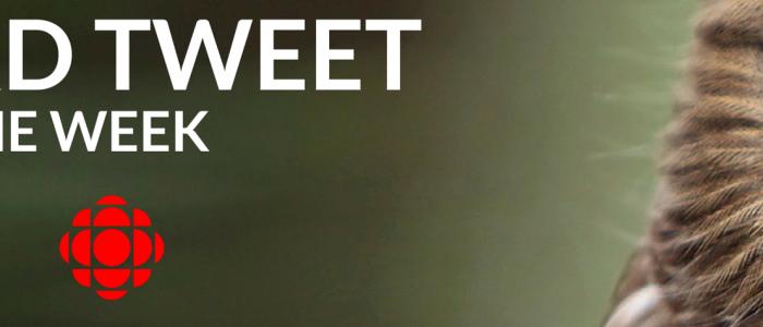 Bird Tweet Logo with Owl
