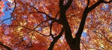 Connect with Nature: Enjoy Fall Colours