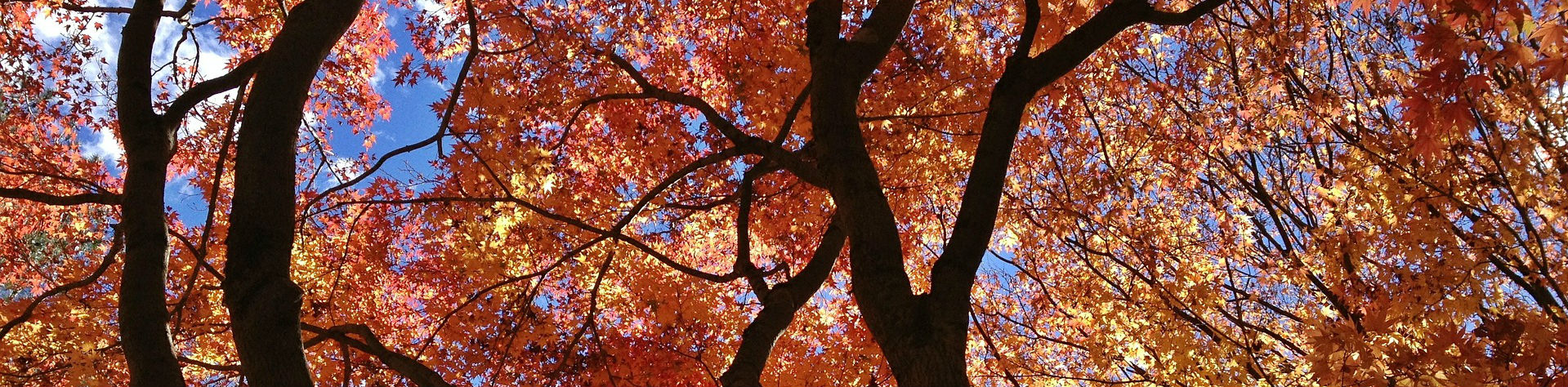 Tree Blog Featured Image