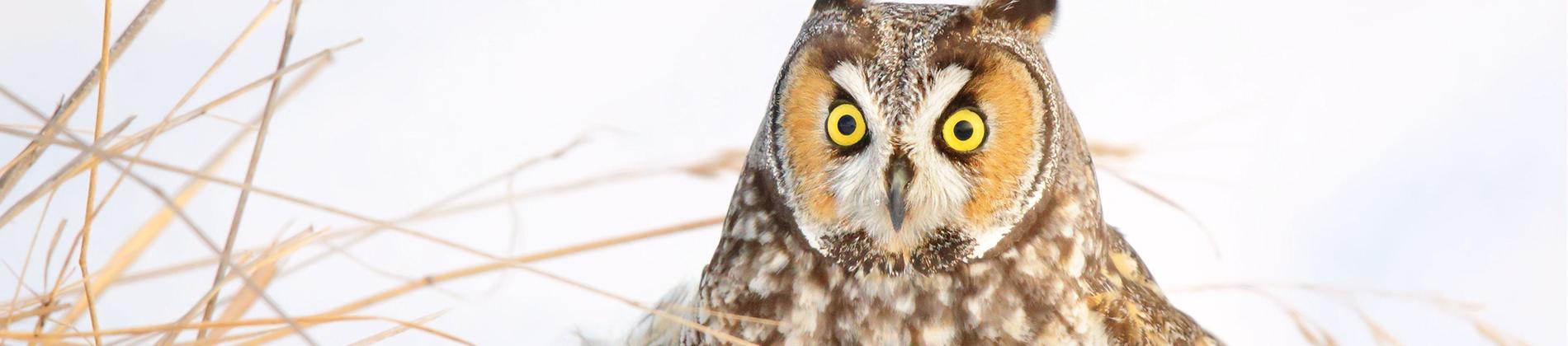 Owl-Web-Banner