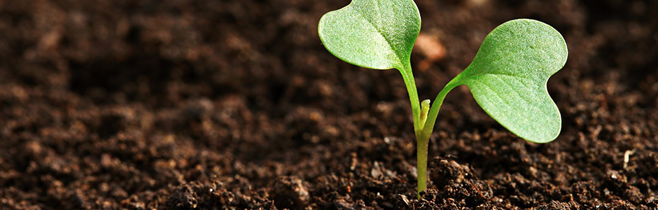 image of a plant growing banner
