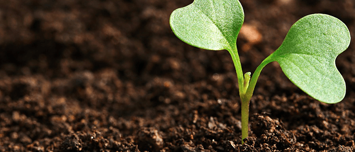 Image of a Plant Growing