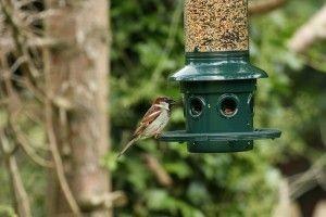 Sparrow at a bird feeder