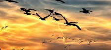Celebrating Our Migratory Birds