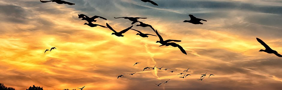 Image of birds flying
