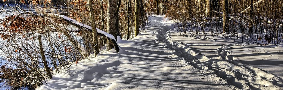 Image of a winter path