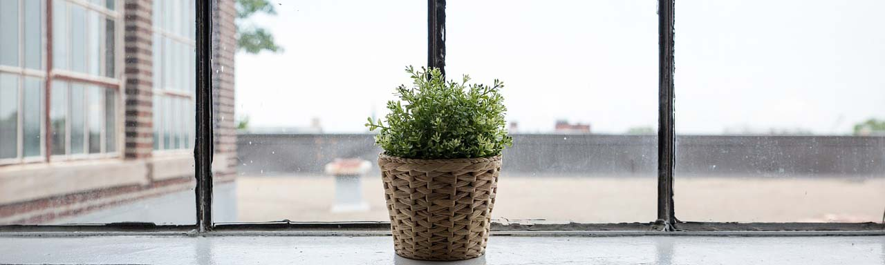 Image of a plant on a window sill