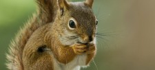 Celebrate Squirrel Appreciation Day with 9 Surprising Facts