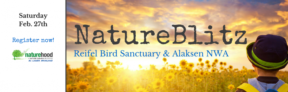 NatureHood Events - Lower Mainland NatureBlitz, February 27 2016