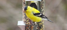 Connect with Nature: Set up a backyard bird feeder