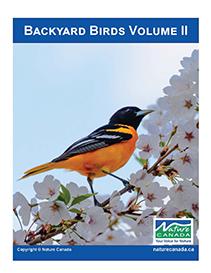 Image of Backyard Bird VII e-Book