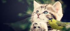 Keeping Cats Safe and Saving Bird Lives