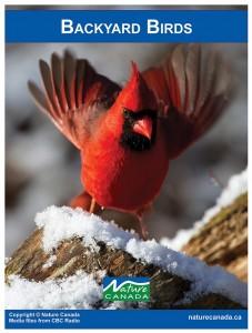 Image of a cardinal