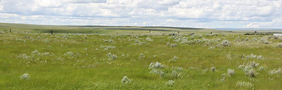 Image of Grasslands