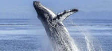An underwater musical starring whales