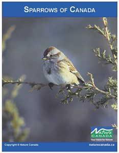 Image of the Sparrow e-Book