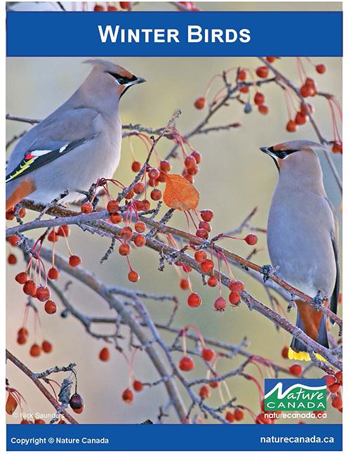 Image of Winter Birds e-Book cover