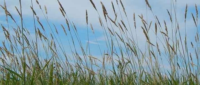 Image of prairie grasslands