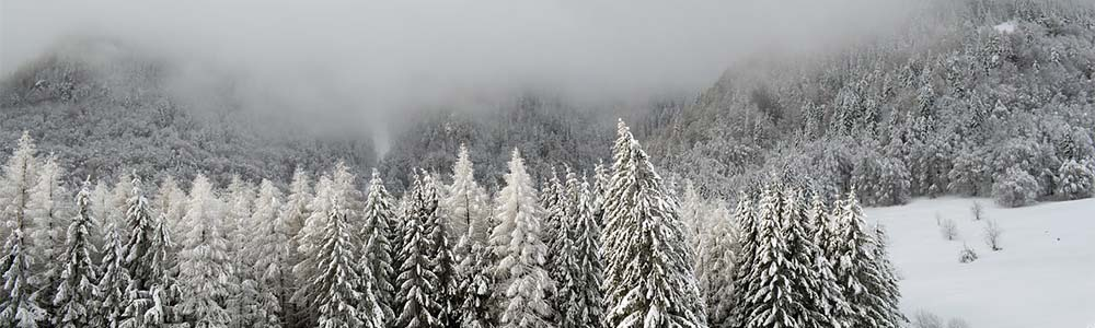 Image of trees and fog
