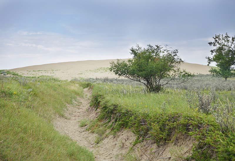 Image of The Great Sandhills