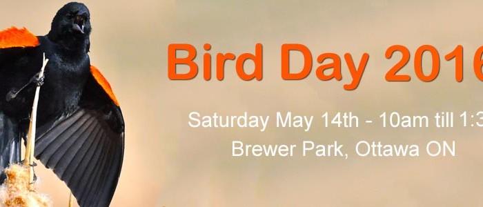 Blog Photo - Bird Day