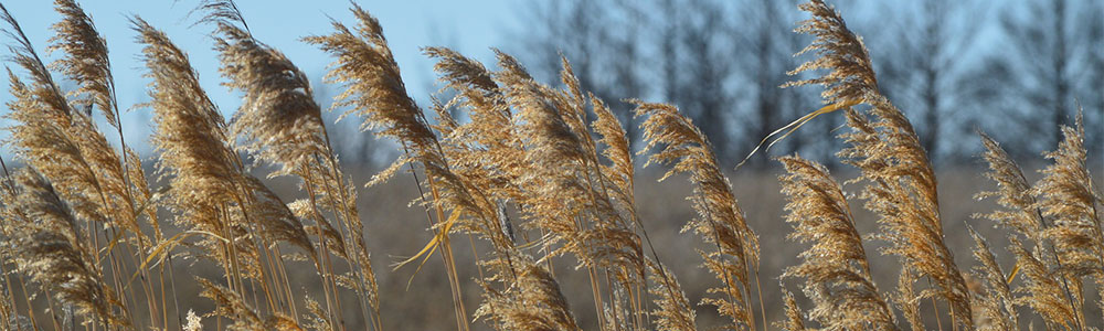 Political Leadership Needed to Protect Grasslands
