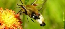 Attract Pollinators to Your Garden!