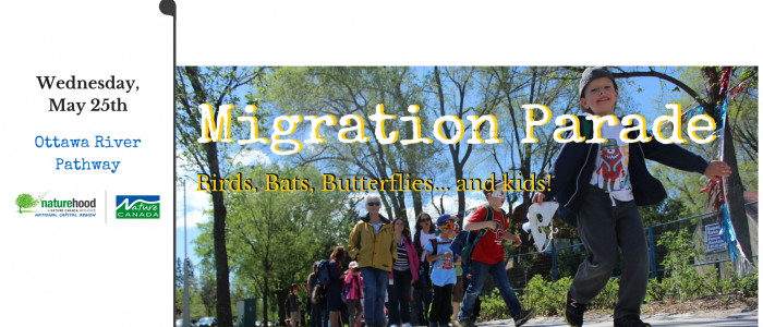 Feat. image NatureBlitz banner (Lower Mainland) (1)