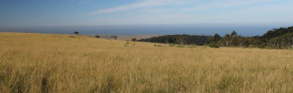 Images of Grasslands