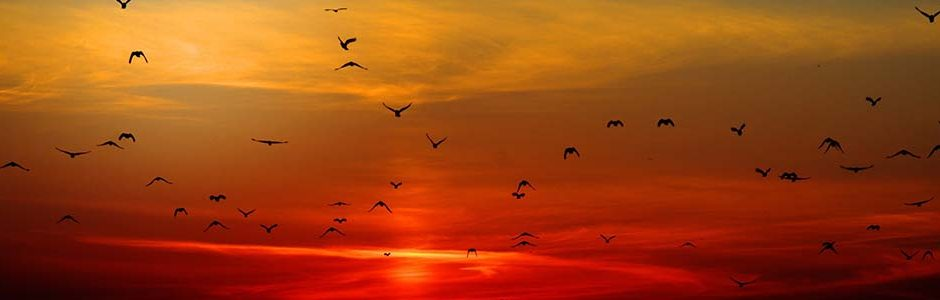 Image of birds flying into sunset