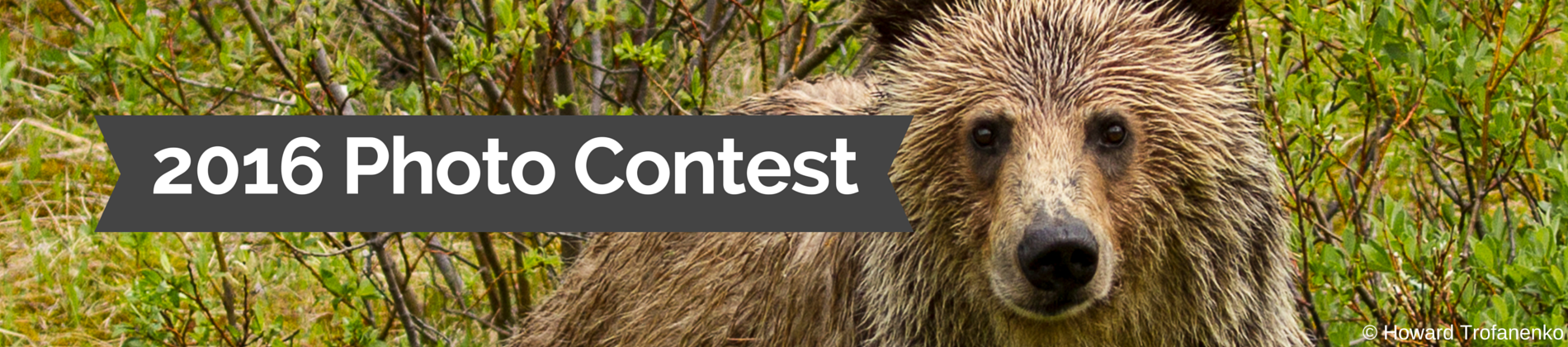 Web-Banner-Grizzly