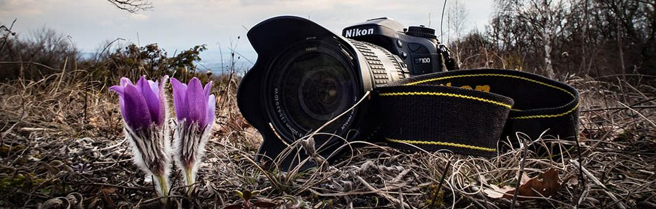 Image of a Nikon Camera and wildflowers