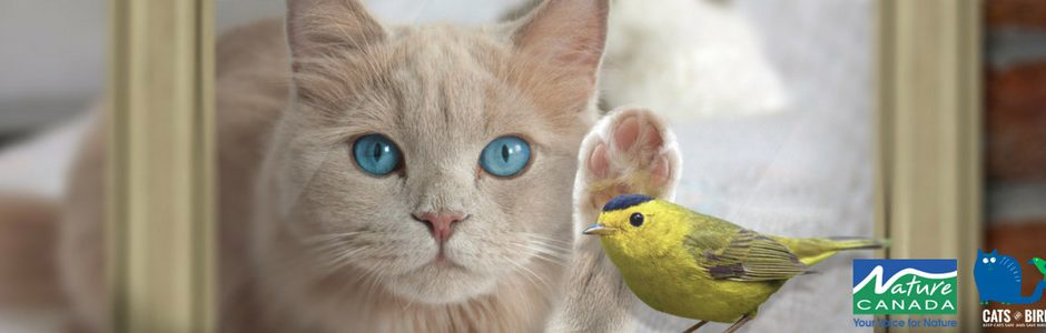 Image of a cat and a bird