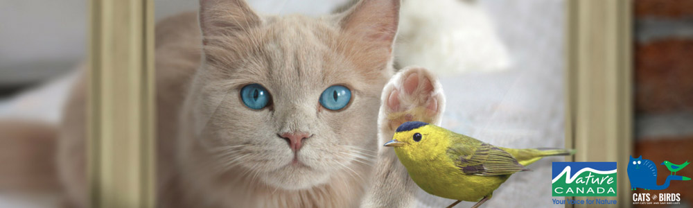 An Interview with Fuller Landau, Corporate Sponsor of the Cats and Birds Campaign