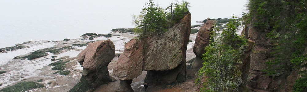 Nature Canada fighting for the Best Interest of the Bay of Fundy